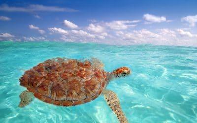 Rancho San Lucas Updates Sea Turtle Nesting Season 2018 Has Begun