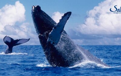 Enjoy Whale Watching Season At Rancho San Lucas